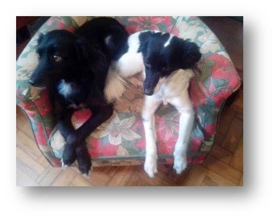 Creche para Cachorro na Vila Mariana