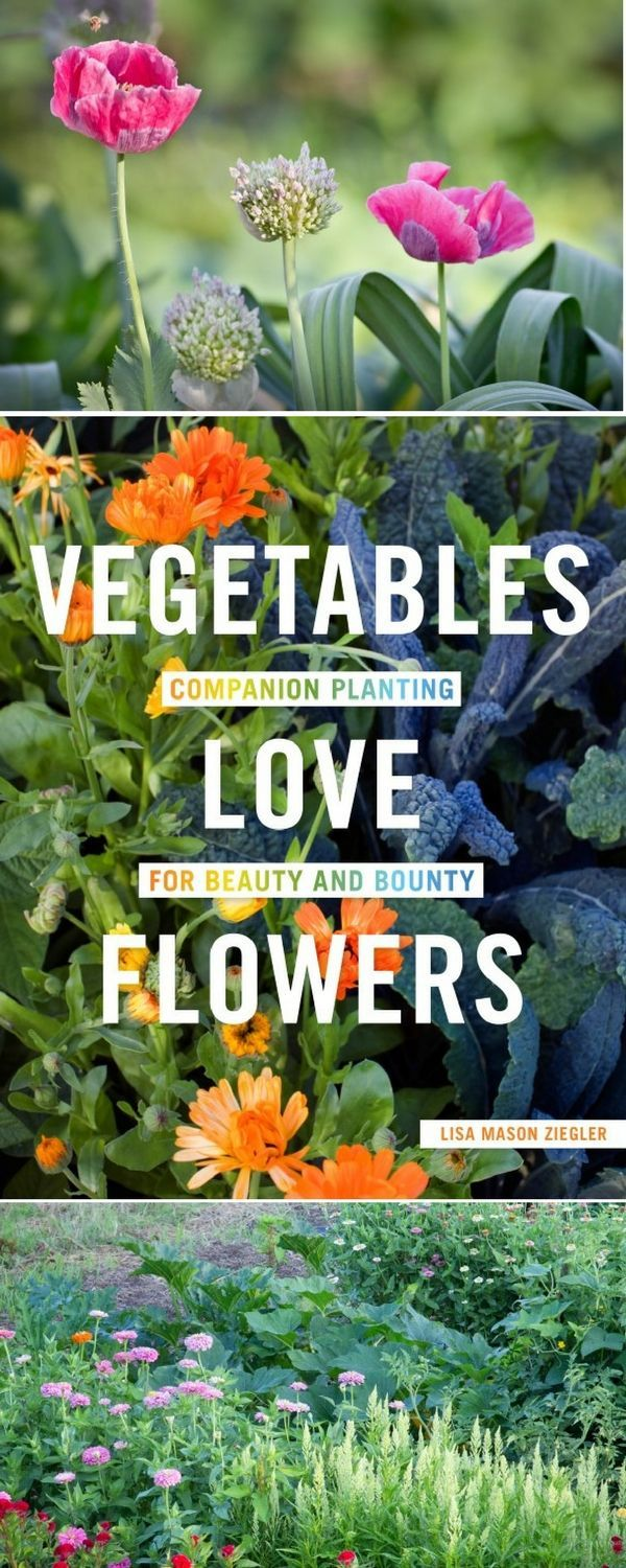 Interplanting flowers with vegetables isn't all about prettying up the garden—flowers can actually help produce grow better! #gardentherapy #vegetablesloveflowers #flowers #growingfood