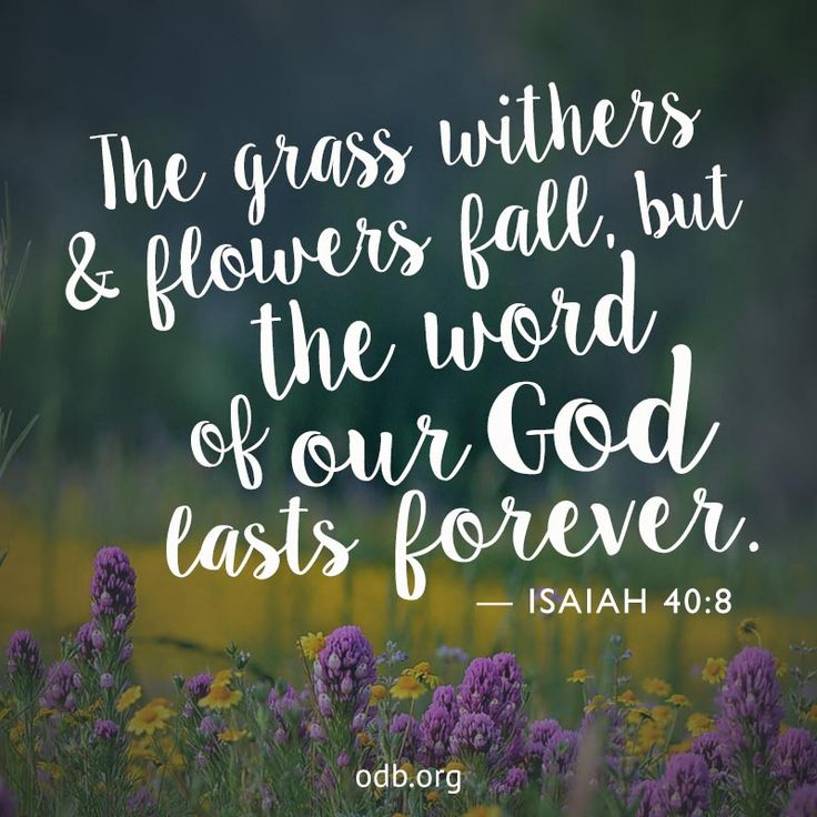 The grass withers and flowers fall, but the word of our ...