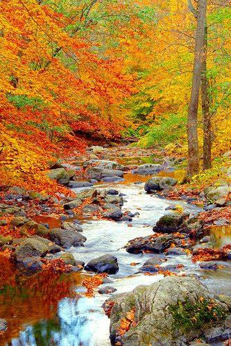 Fall has to be one of the most beautiful times of the year. Take time to look around and appreciate all the beauty.