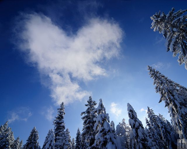 A beautiful winter ice heart...so delicate... #Love #Heart ...   Hearts In Nature Winter