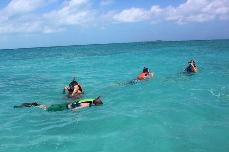Explorando los Arrecifes y Vida Acuática de Isla Contoy