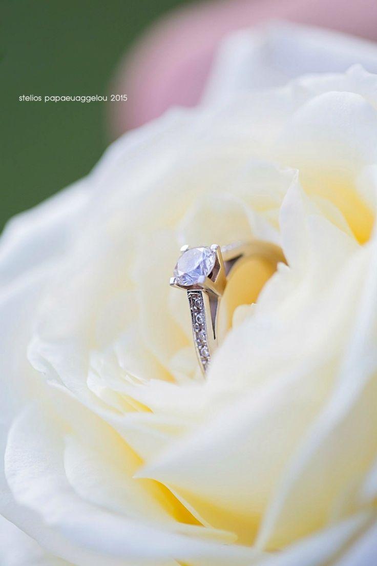 Wedding rings rose