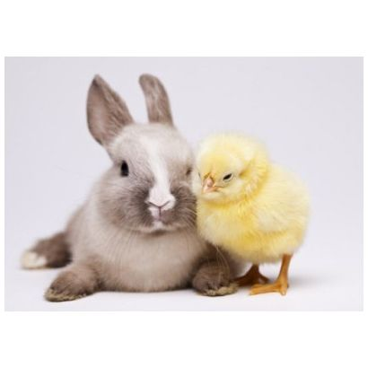 Rabbit and Chick #postcards