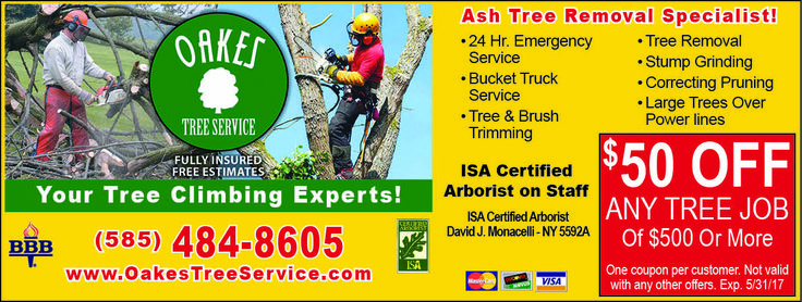 Oakes tree services are experts in rochester ny call 585