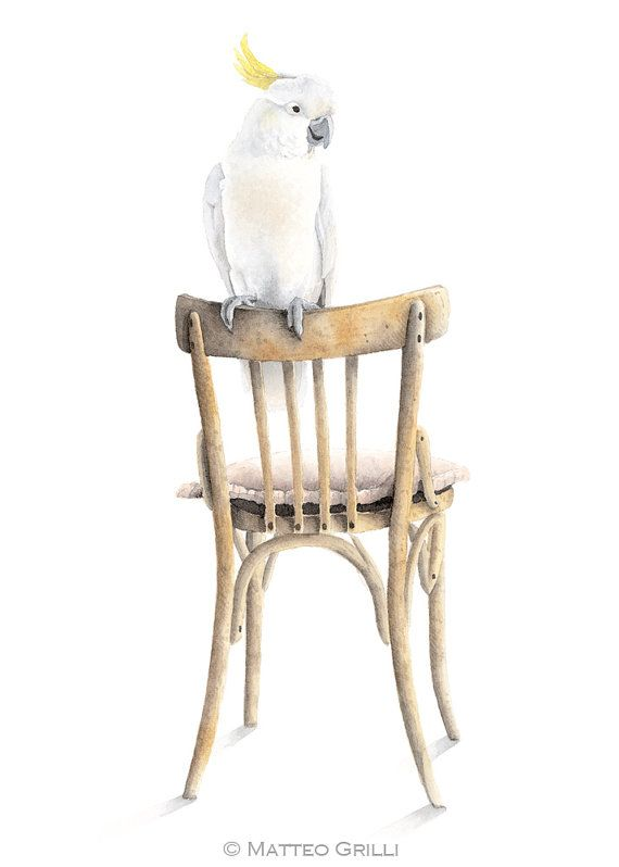 Cockatoo on Chair Watercolor Illustration 11.8 by MatteoGrilliArt, $28.00
