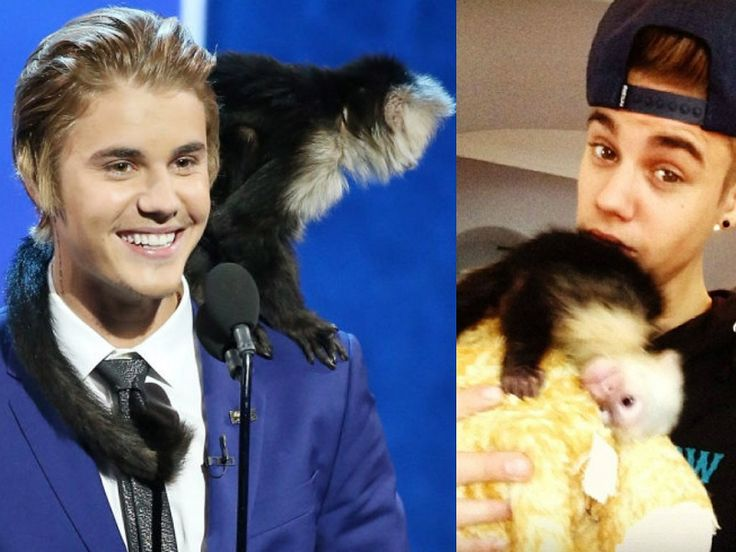 Superstars And Their Unusual Pets | Fashionmgzne