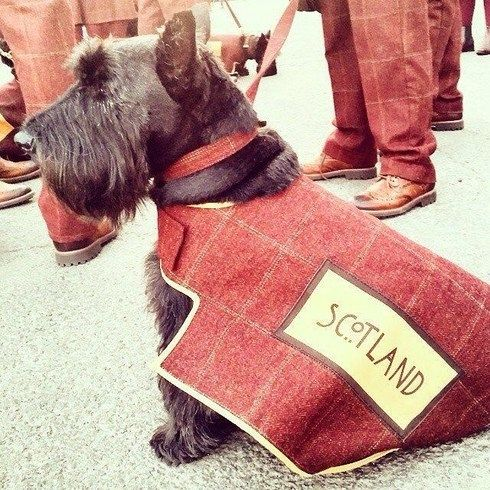 #scottiedogs Glasgow 2014 Commonwealth Games