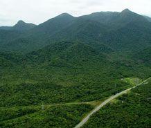 Mata Atlântica :: Prefeitura Municipal de Matinhos ::
