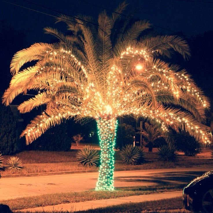 "Key Arena Christmas Lights: The Way ""Christmas Trees"" Look On Siesta Key!"