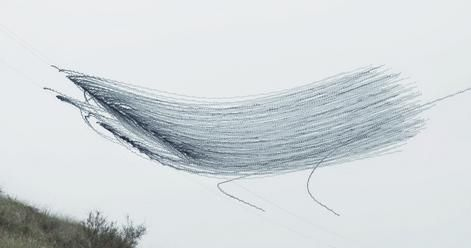 Een zwerm spreeuwen op de steppe van Lleida in Catalonië. De vogels vliegen op van elektriciteitskabels.