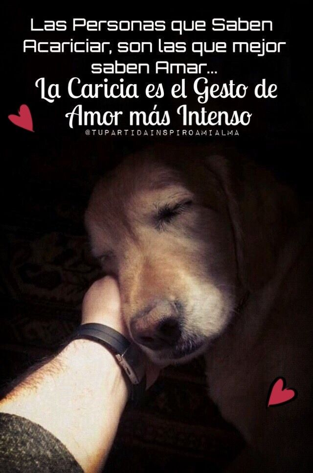 L Intenso Perros Frases Animales Frases Y Amor