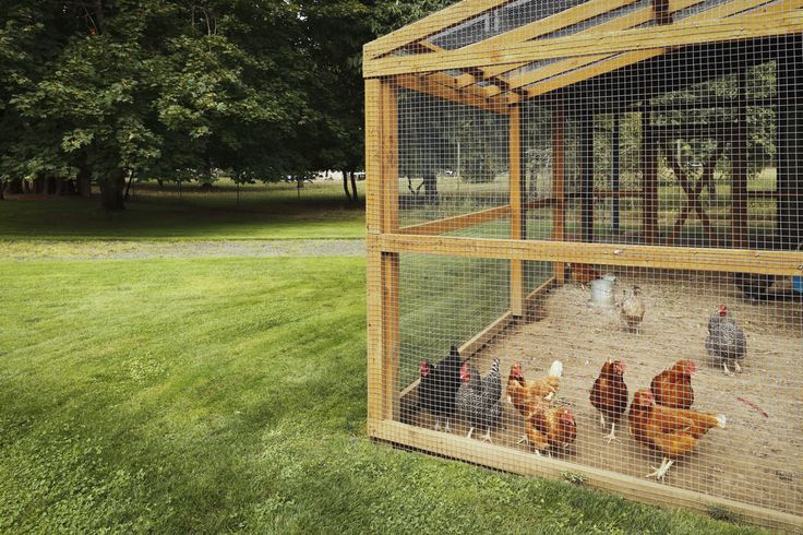 Looking for ideas on how to build chicken runs and coops from recycled materials? Here are 4 great ways to build the chicken coop of your dreams!