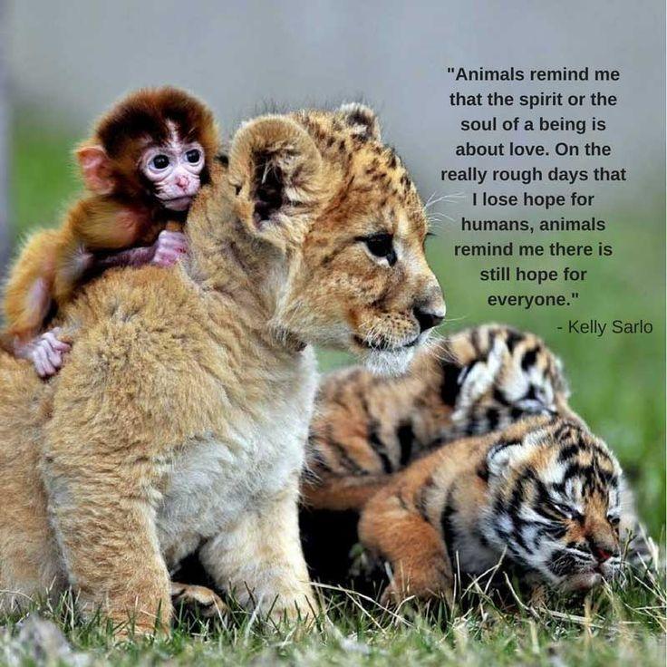 Animals - https://bysarlo.com/animals/