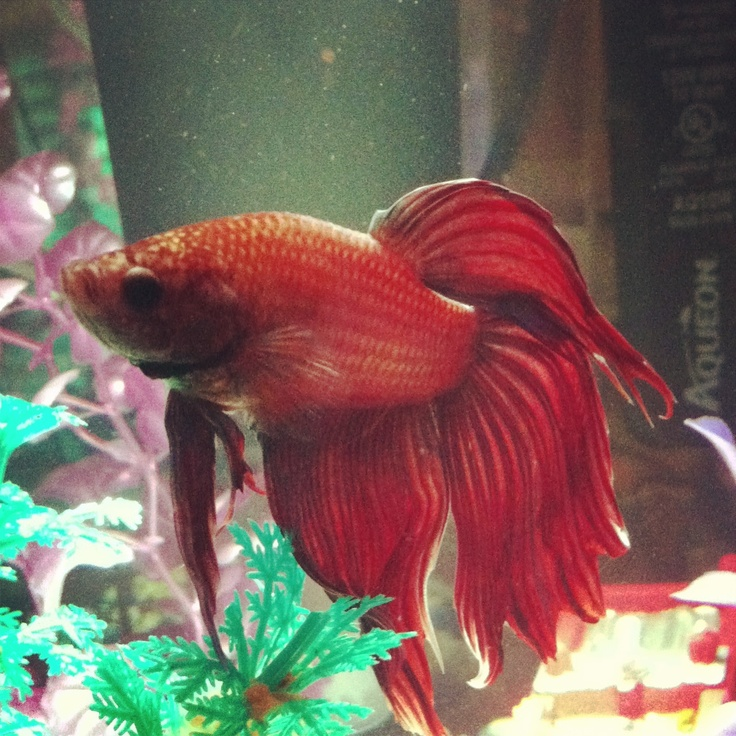 1000 images about betta tank on pinterest fresh water for Toys for betta fish