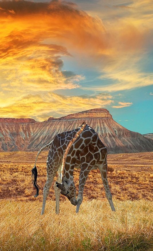 The sights of Africa are like none other in the world.