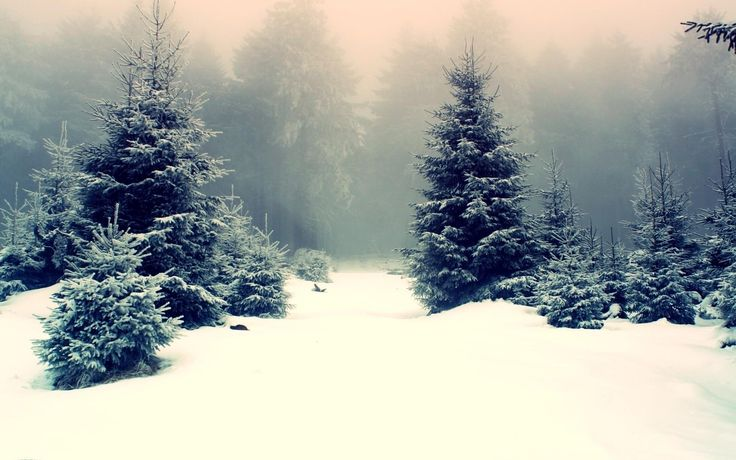 awesome snowy fir trees