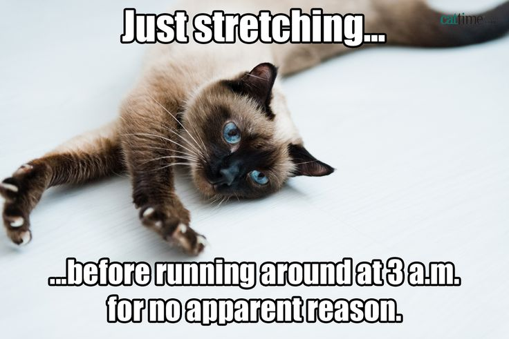More than two dozen pictures of funny cats, sad cats, and sympathetic cats, with words added by humans.