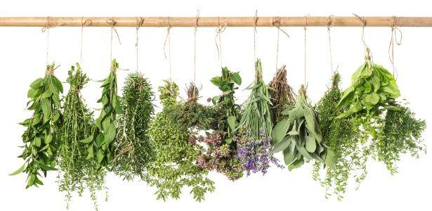 Não confunda salsa com coentro! Aprenda como usar ervas para temperar