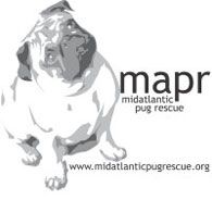 Mid-Atlantic Pug Rescue - Serving North Carolina, South Carolina, Virginia, Maryland, West Virginia, and Tennessee - Adopt a Pug