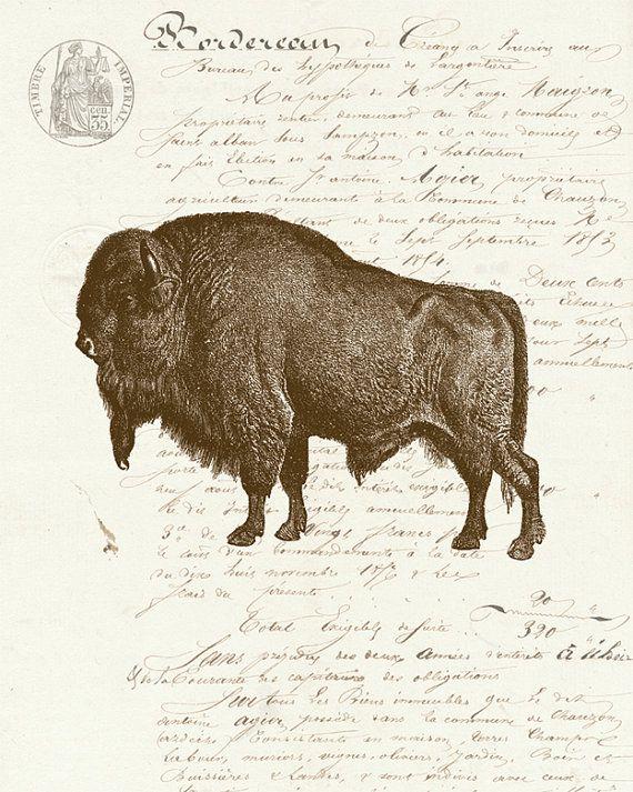 Les 25 meilleures id es de la cat gorie tatouage bison sur - Photo de bison a imprimer ...