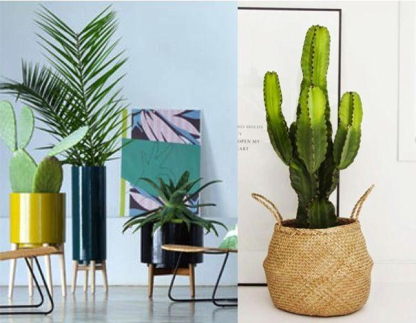 ponad 25 najlepszych pomys w na pintere cie na temat plante verte plante verte int rieur. Black Bedroom Furniture Sets. Home Design Ideas