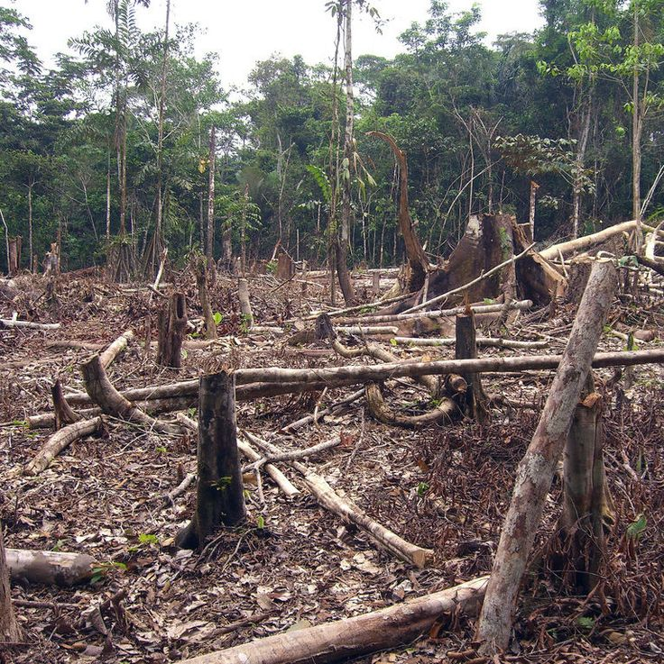 deforestation of the rainforests essay Dear earthtalk: is it true that cutting and burning trees adds more global warming pollution to the atmosphere than all the cars and trucks in the world combined— mitchell vale, houston by most accounts, deforestation in tropical rainforests adds more carbon dioxide to the atmosphere than the sum total of cars and trucks on the world's roads.
