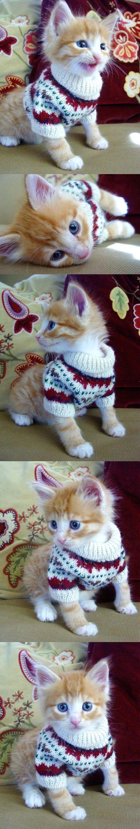 um mini gatinho com um mini suéter owwwn
