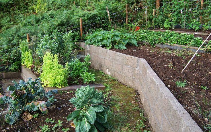 Terraced vegetable garden garden pinterest vegetable for Terrace vegetable garden ideas