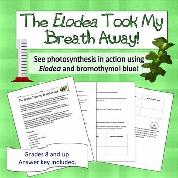 "The Elodea Took My Breath Away! Photosynthesis lab using BTB as an acid indicator to ""see"" photosynthesis in action!"
