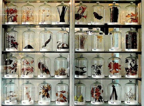 collection (specimens in bell jars)