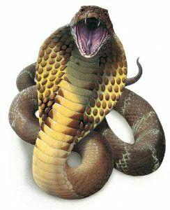 King cobra 2