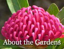 Australian National Botanic Gardens - Botanical Web Portal