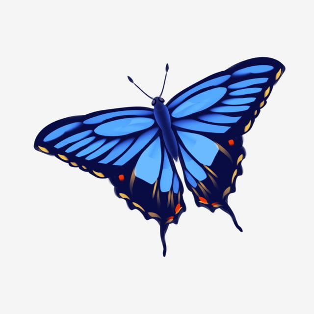 Light Blue Butterfly Illustration Butterfly Clipart Light Blue Butterfly Flying Butterfly Png Transparent Clipart Image And Psd File For Free Download Butterfly Illustration Blue Butterfly Butterfly Clip Art