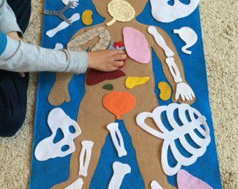 Human anatomy felt set science toy academic felt by Myfelthome