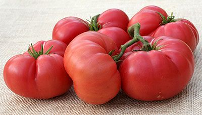 27 Best Images About Growing Tomatoes On Pinterest 400 x 300