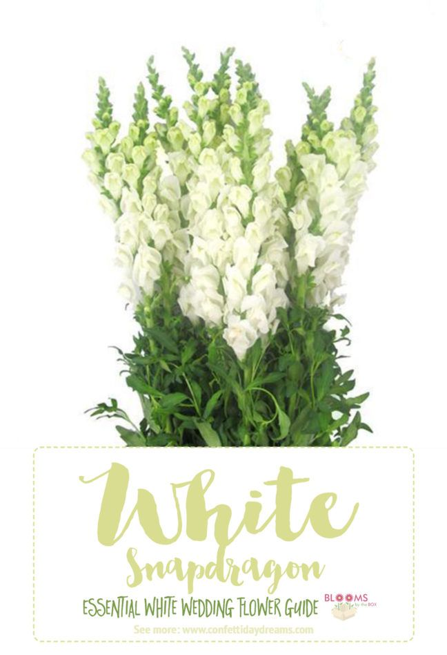 Essential White Wedding Flower Guide Names Types Pics Wedding