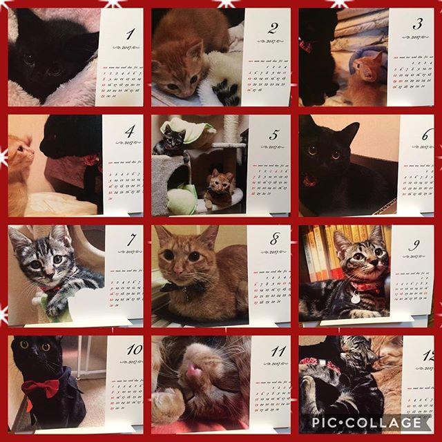 我が家の来年のカレンダー出来ました💓 前#tolot でくうちゃんのアルバムを作ったのと、 フォローさせて頂いてる方が オリジナルカレンダーを作られてるのを見て作りました💓 @tolot_official のアプリで作った オリジナルカレンダー🎁✨ #卓上カレンダー 500円 !! で作れちゃうんです💓 毎月#くうちゃん #かいちゃん #つむちゃん の幼い時の写真を見ながら楽しめていい感じ💓💓 #我が家の猫 カレンダーおすすめです🙌✨ #子猫#猫#ネコ#にゃんこ#にゃんすたぐらむ#にゃんだふるらいふ#茶トラ#茶とら#黒猫#アメショーmix #catbrothers #kittycat #neko#blackcat#browncat #愛猫#保護猫#かいすたぐらむ#猫好き #猫好きさんと繋がりたい#甘えん坊#ふわもこ部#大阪猫部#3にゃんず