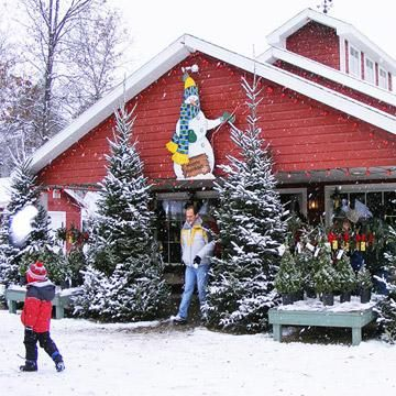 10 reviews of Christmas Tree Shops