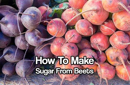 Make Your Own Sugar From Beets,shtf,homesteading,frugal,project,how to,DIY,