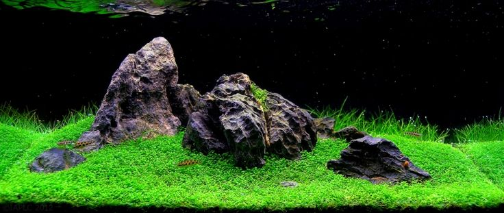 Aquarium Size W40×D20×H20(cm)