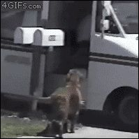 This dog just grabbing the mail. | The 40 Greatest Dog GIFs Of All Time