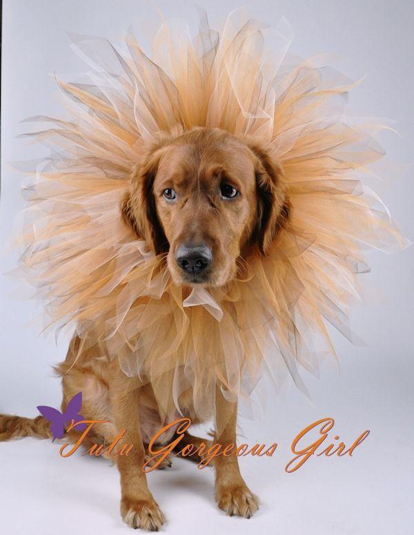 Halloween dog tutu made to look like a lions mane.