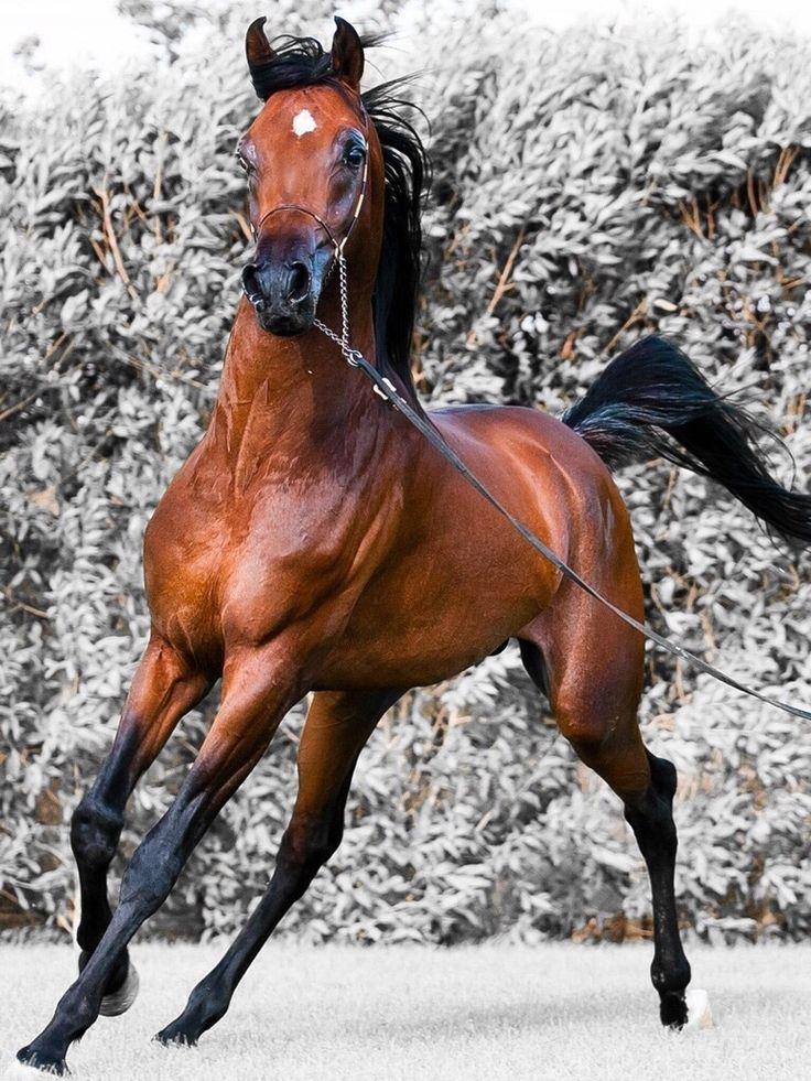 Lyric allele stitches lyrics : 82 best Horses images on Pinterest | Beautiful horses, Pretty ...