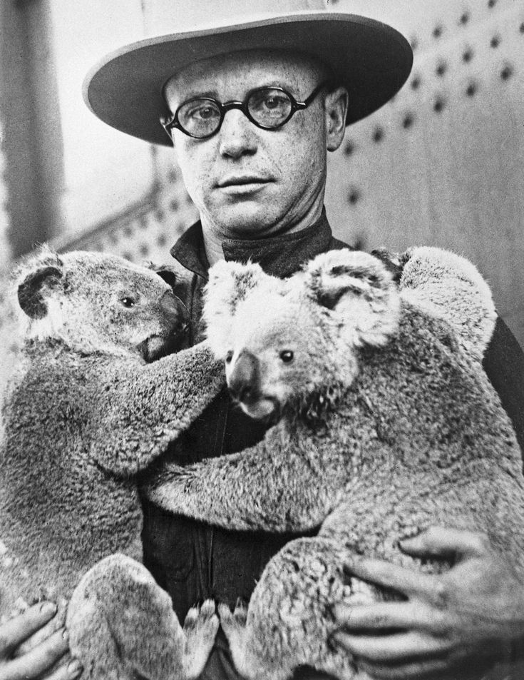 The first koalas in North America arrived at the San Diego Zoo in 1925. The koalas were named Snugglepot and Cuddlepie (seen here with Zoo curator Richard Addison), after the characters in an Australian children's book. They were a huge hit at the Zoo, of course, and people came from all over to marvel at these adorable marsupials. They were also the subject of newspaper and radio reports across the country, bringing attention to the young San Diego Zoo.
