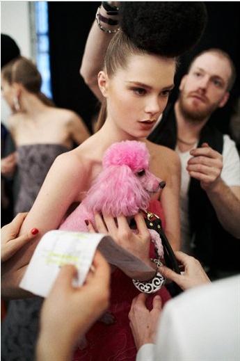 Pink Poodle: Dogs, Pink Poodle, Lux Pets, Fashionable Poodles, Fashion Poodles, Fashionable Pets, French Poodles Les, Fashion Pet, Animal