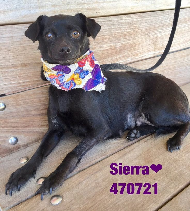 **PAST DEADLINE! Needs Commitment!** San Antonio TX
