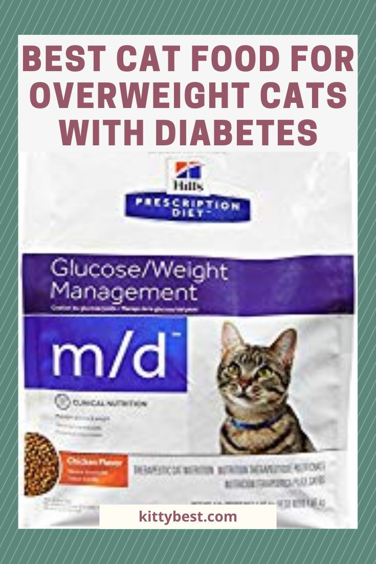 What Is The Best Cat Food For Diabetes In 2020 Best Cat Food Cat Food Cool Cats