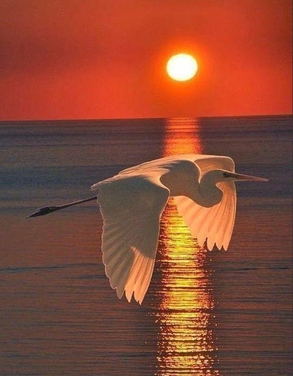 комфортные картинка с сердцем и чайкой сих