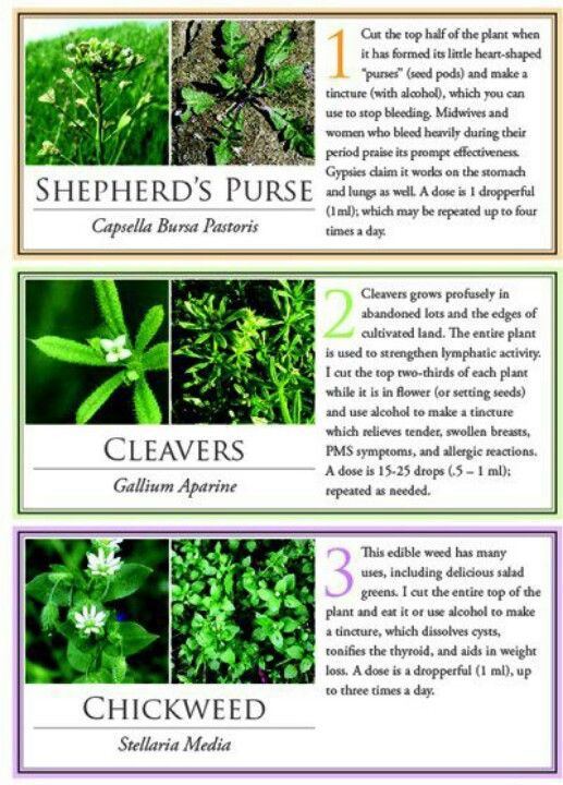 medicinal flowers and their uses Check out our long edible flowers list dill, oregano and thyme have the same flavor and medicinal while also creating something worth sustaining in their.